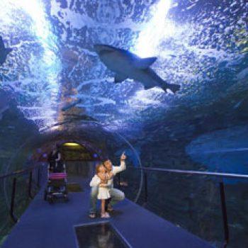 aquarium-tiburones