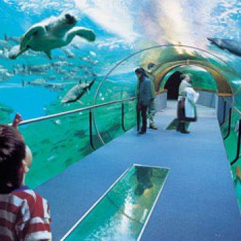 aquarium-tunel
