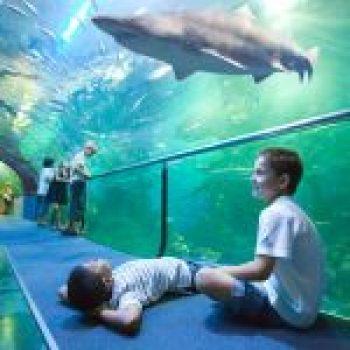 Aquarium. Palacio del Mar de Donostia / San Sebastián